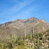 Arizona Landscape Royalty Free Stock Images
