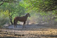 Arizona Landscape with Salt River Wild Horses stock images