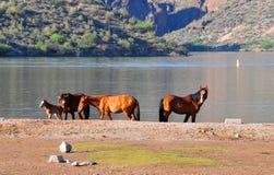 Arizona Landscape with Salt River Wild Horses Royalty Free Stock Photo