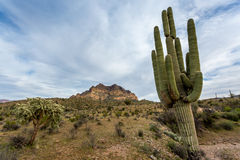 Arizona Landscapes Stock Photo