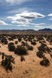 arizona liggande Arkivbilder