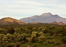 arizona liggande Arkivbild
