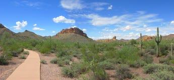Arizona Lost Dutchman Park. Arizonan Saguaro Cacti in Lost Dutchman State Park royalty free stock photos