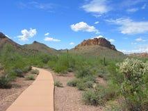 Arizona Lost Dutchman Park. Arizonan Cholla and Saguaro Cacti in Lost Dutchman State Park stock photography
