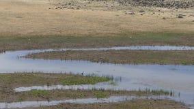 Arizona, Meer Mary, de brede mening van A van het resterende water in Lager Meer Mary en comorant vogel stock videobeelden
