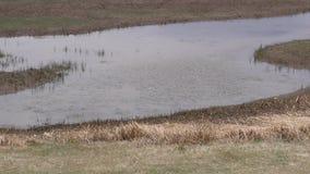 Arizona, Meer Mary, dichte omhooggaand van het resterende water in Lager Meer Mary stock video