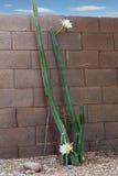 Arizona mest populär trädgårds- kaktus, totempålefamilj Royaltyfria Bilder