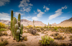Arizona Mountain Desert Landscape Stock Photo