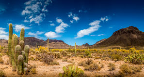 Arizona Mountain Desert Landscape stock photo