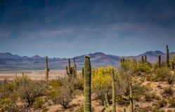 Arizona Mountain Desert Landscape Stock Image