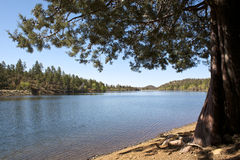 Arizona Mountain Lake. Shoreline view of Lynx Lake on a clear day near Prescott, AZ Stock Photo