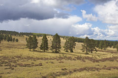 Arizona Mountain Scenic. A high mountain scenic landscape with meadow and pines Stock Photos