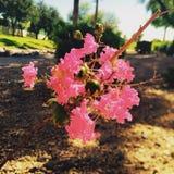 Arizona-Natur-Landschaft andere Lizenzfreie Stockfotografie