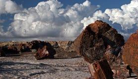arizona naturlig park arkivbild