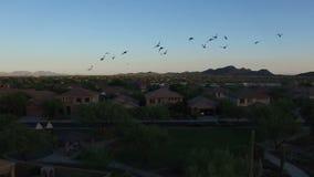 Arizona Neighborhood Park at Sunset. Birds flying towards the camera at a neighborhood park in northern Arizona stock footage