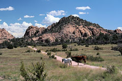 Arizona-Pferde Stockbild