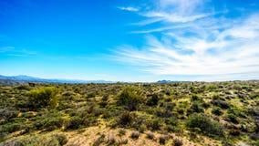 Arizona pustyni krajobraz z swój wiele Saguaro i inne góry kaktusów i odległych Zdjęcia Stock