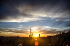Arizona pustyni zmierzch Obrazy Royalty Free