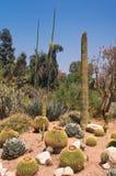 arizona pustynia Zdjęcia Royalty Free