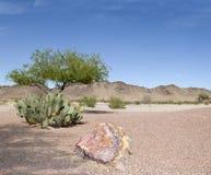 arizona pustynia Obrazy Royalty Free