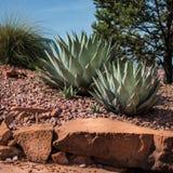 Arizona-rote Felsen-Landschaft stockfotos