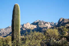 Arizona's Catalina State Park Stock Photo