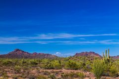 Sonoran desert in Arizona. Saguaro cactus and other native plants in foreground; rocky hills, blue sky and wispy clouds in backgro. Arizona`s Sonoran desert in royalty free stock photos