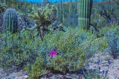 Free Arizona Saguaro National Park Wildflowers And Cactus Stock Photos - 144559663