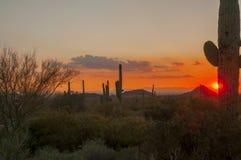 Arizona Senoran ökensolnedgång Arkivbild