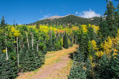 Arizona Snowbowl in summertime in Flagstaff,. Arizona, United states royalty free stock image