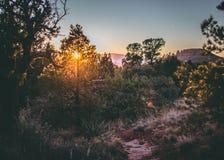 arizona solnedgång arizona vinter Royaltyfri Foto
