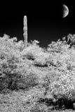 Arizona Sonora Desert Moon in infrared monochrome. Infrared monochrome desert moon over the southwestern USA Sonora desert Arizona and mountains royalty free stock photography