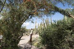 The Arizona Sonora Desert Museum South of Phoenix Arizona USA Royalty Free Stock Photo