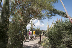 The Arizona Sonora Desert Museum South of Phoenix Arizona USA Stock Images