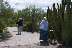 The Arizona Sonora Desert Museum South of Phoenix Arizona USA. The Flora and Fauna of the Arizona Desert in an open air museum to educate people about the beauty Stock Photos
