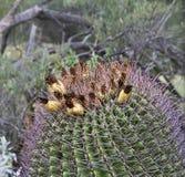 The Arizona Sonora Desert Museum South of Phoenix Arizona USA Stock Photo