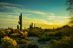 Arizona Sonoran Desert. Late afternoon light in the Sonoran Desert of Arizona Royalty Free Stock Image
