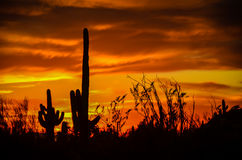 Arizona Sonoran Desert. Sunset at Usury Mountain Park near Phoenix royalty free stock images