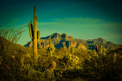 Arizona Sonoran Desert. Superstition Mountains bathed in late afternoon light Stock Images