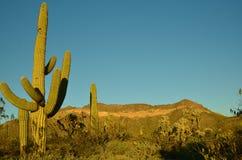 Arizona Sonoran Desert. Usury Mountain Regional park near Phoenix Royalty Free Stock Photo