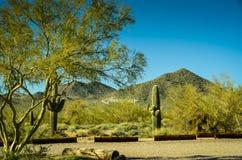 Arizona Sonoran Desert. Usury Mountain Regional park near Phoenix Royalty Free Stock Photos