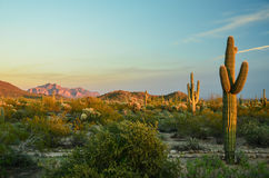 Arizona Sonoran Desert. Usury Mountain Regional park near Phoenix, late afternoon magic light stock photography