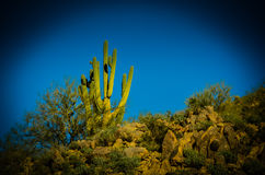 Arizona Sonoran Desert. Usury Mountain Regional park near Phoenix Royalty Free Stock Photography