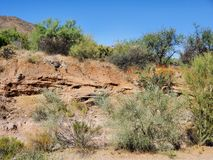 Arizona summertime desert landscape stock photography