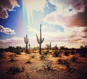 Arizona stock images