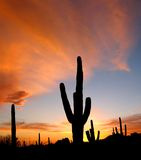 Arizona Sunset Royalty Free Stock Images