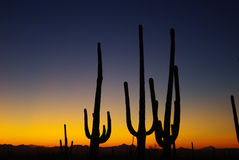 Arizona Sunset Stock Images