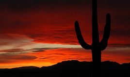 Arizona sunset Royalty Free Stock Image