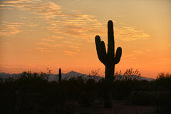 Arizona sunset  with cactus Royalty Free Stock Image
