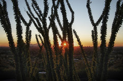 Arizona sunset landscape Stock Images